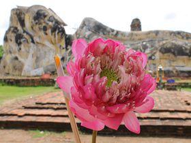 アユタヤ遺跡で楽々観光「ワット・ロカヤスタ」巨大涅槃仏は駐車場から30秒!|タイ|トラベルjp<たびねす>