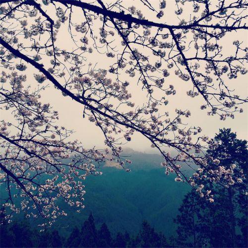 【熊野古道をどう伝えるか問題③】外国人からの熊野古道に関する質問状の答えを考えてみた。(Dear ジェーン) - アラフォー女バックパッカーの無敵の旅の話