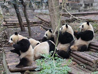 三国志と世界遺産、パンダのふるさとを巡る成都8日間の旅