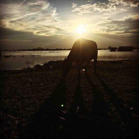 #アンコールワット日本語ガイドトム(525) #アンコールワット郊外の観光スポットおすすめ夕日観賞ツアー