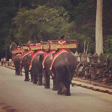 アンコールワット日本語ガイドトム(673)アンコールワットで象さんに乗りましょう