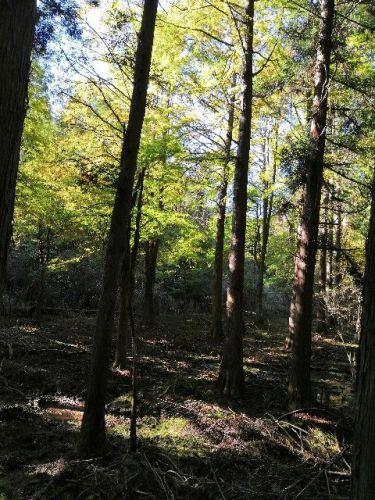 高野山のふるい登山道で森林浴をしたら、天狗風を見た。 - ふみのや ときわ堂