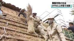 五箇山で生徒がかやのふき替え(NHK 令和2年10月13日 19時25分)