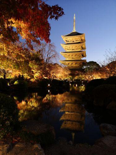 京都の世界遺産❕東寺のライトアップ✨