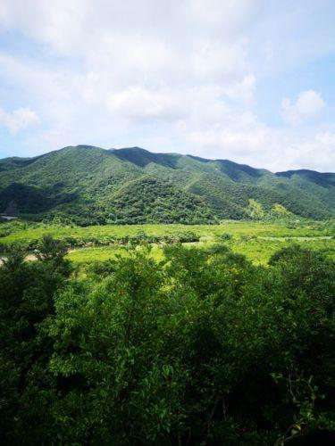 まもなく世界自然遺産❕奄美大島☘️✨