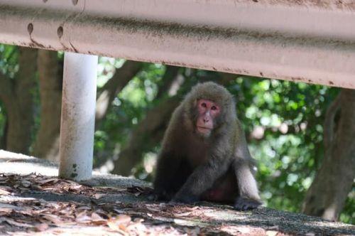 屋久島は動物の楽園。リラックスした姿を見せてくれる「ヤクシマザル」